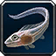 Small Crescent Saberfish